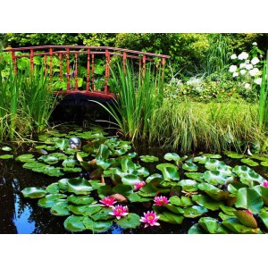 Растения для водоёмов