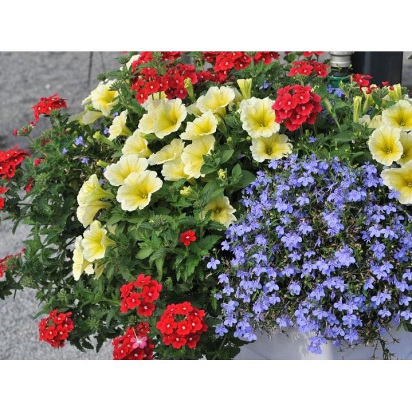 Растения в подвесных кашпо и плошках